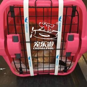 宠物托运深圳宠乐游【包装展示】