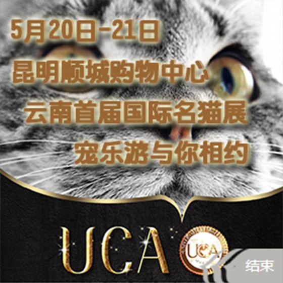 西南首届名猫展(即云南首届国际名猫展)在昆举行