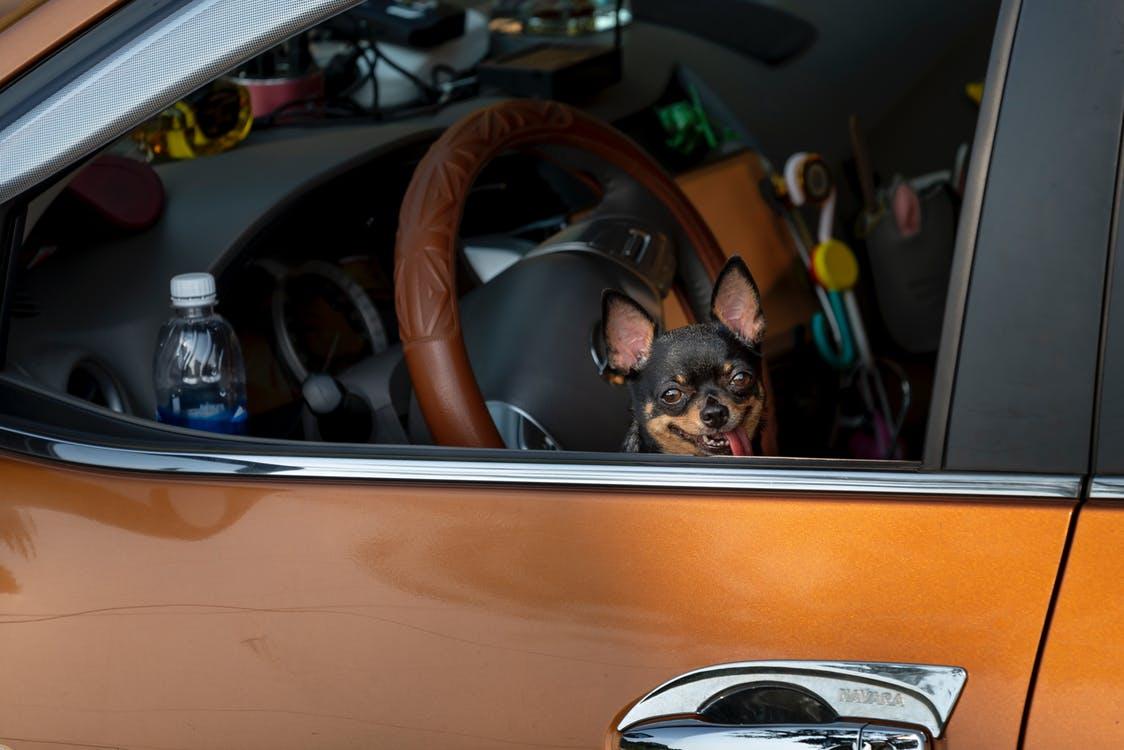 汽车托运宠物可以吗