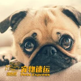 宠物价格表与宠物托运空运价格