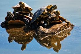 哪家快递允许寄乌龟