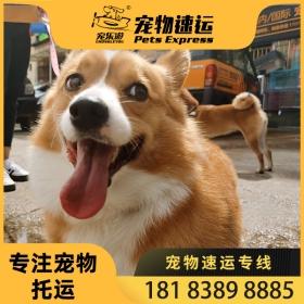 大理宠物托运公司