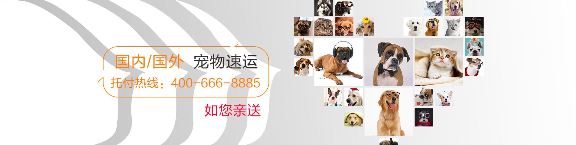 国内国际宠物托运