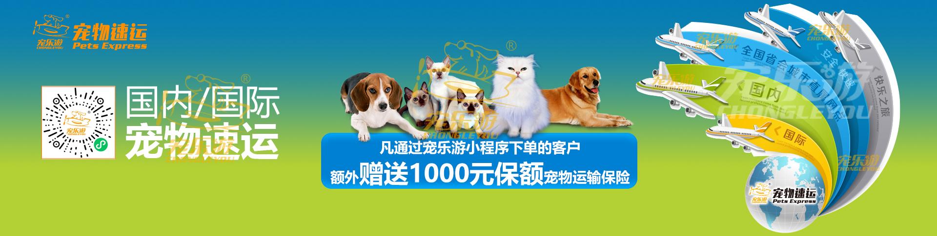 国内国际宠物托运服务